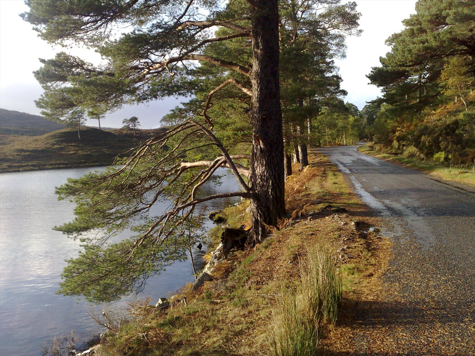 road to shieldaig and torridon at glen shieldaig